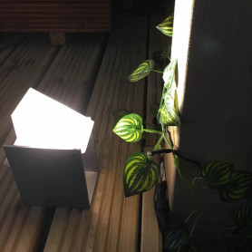 £50 Garden Light Gift Voucher